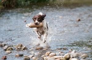 מאלף כלבים מקצועי