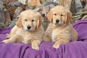 מה בין הרצאות על יחסים ואילוף כלבים?