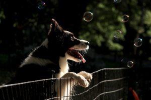 על יחסים וכלבים