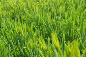 דשא סינטטי לגני ילדים - כמה זה עולה?