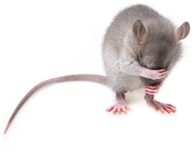 מרחיק עכברים