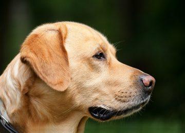 אילוף כלבים בפנסיון בקריות