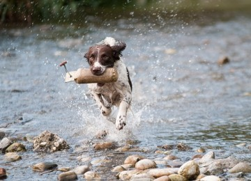 טיפים לבחירת מאלף כלבים מקצועי