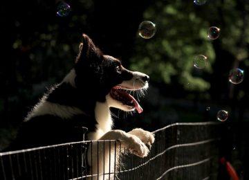 אילו סוגי גדרות שונים קיימים לכלבים