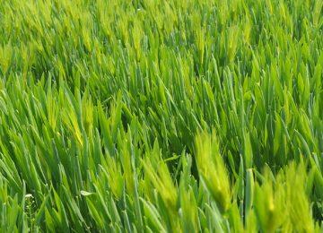 דשא סינטטי לגני ילדים – כמה זה עולה?